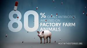 80% of All Antibiotics in US Consumed by Animals First, THEN by YOU