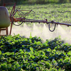 Fungicides May Cause Damage To Brain, Mimic Effects Of Autism, Neurodegenerative Disorder