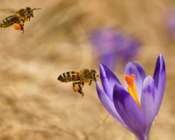 Bayer Neonicotinoids Found To Be Dangerous To Bees By EPA