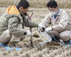 Rice and Radiation: Fukushima Agricultural Group Gets Permission To Sell Rice in the U.K.