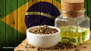 Brazil Approves Use Of Hemp Cannabidiol As A Cancer Treatment