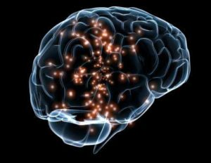 How Smart Is Smart? Using An MRI To Quantify Human Intelligence