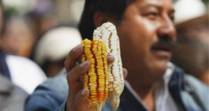 Indigenous Groups In Mexico Win Victory Over Monsanto, Biotech Giant Has GMO Soy Permit Suspended