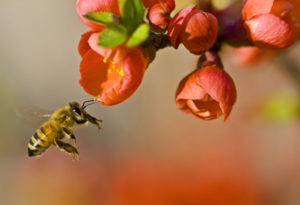 As If We Haven't Done Enough Damage Already: Yet Another Way We Are Killing Honeybees With Neonicotinoids