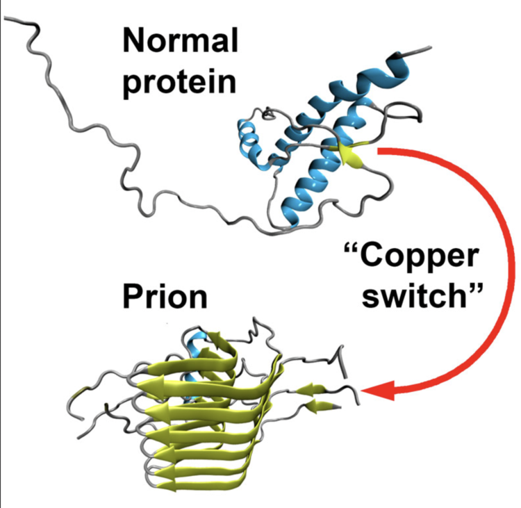 Prion Producing mRNA Vaccines May Be The Biggest Public Health Misstep Of All Time